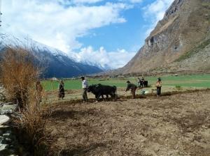 Tsum Valley after Chokang Paro