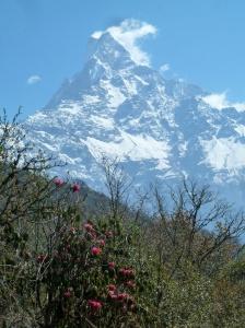 Macchapuchre from Low Camp on Mardi Himal Trek